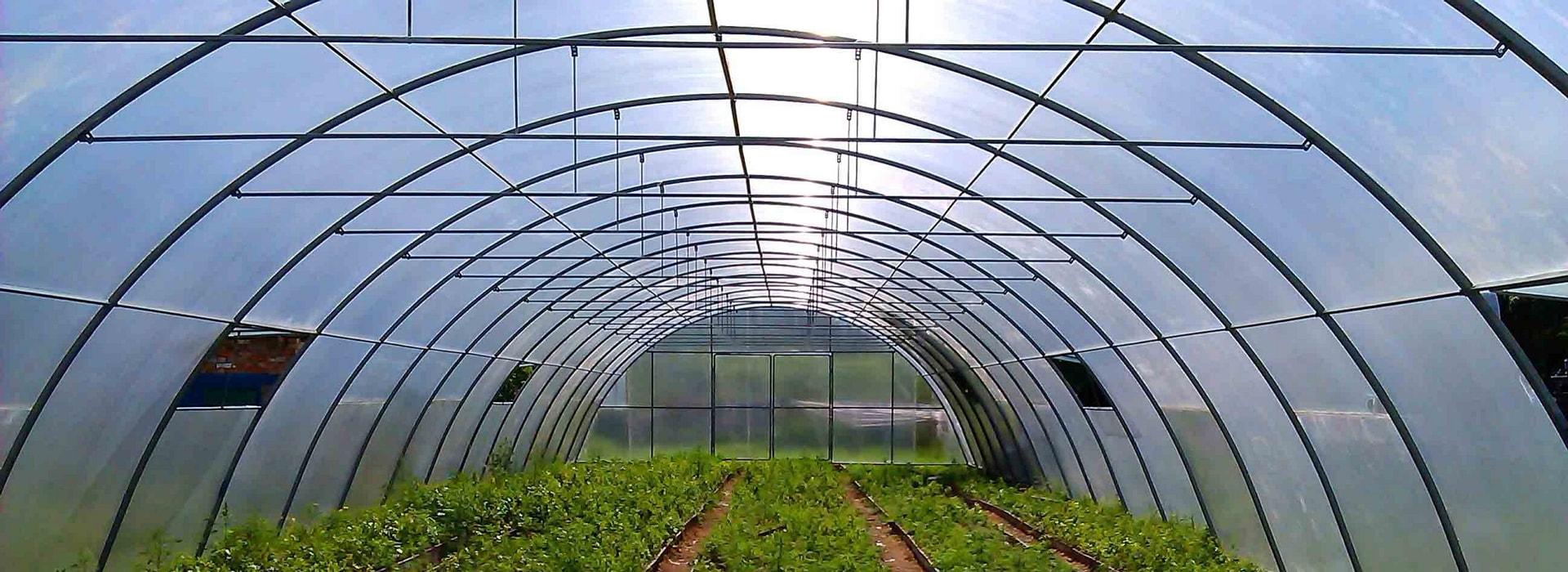 применение поликарбоната в сельском хозяйстве фото 2